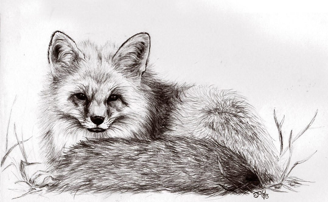 Sly Old Fox by JoyKodani