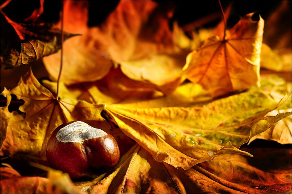 Autumn Mood by fuchsphoto