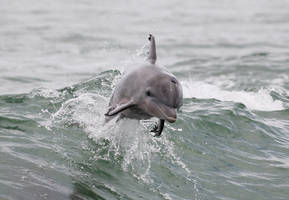 Dolphin jump by Eegaas