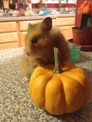 Houdini and The Pumpkin 1 by Mikomi-Hatake