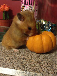 Houdini and The Pumpkin 2 by Mikomi-Hatake