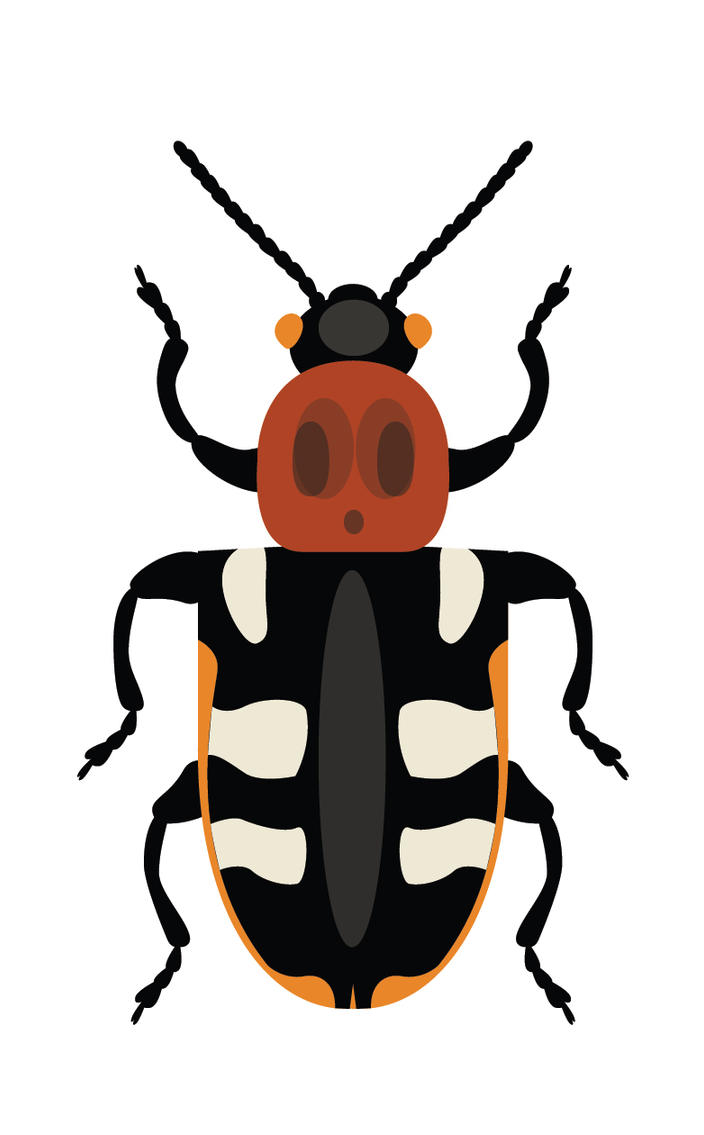 Day 22: Common asparagus beetle by ysyra