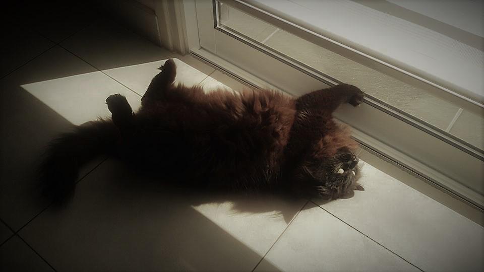 -sunbathing- by LonesomeBookworm
