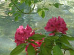 Red lake flowers