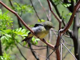 Seagreen Birdy by uguardian