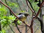 Seagreen Birdy