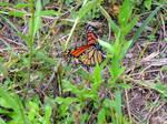 Upside down Monarch