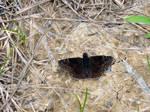 Dirty little butterfly