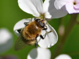 Enjoying some nectar by uguardian