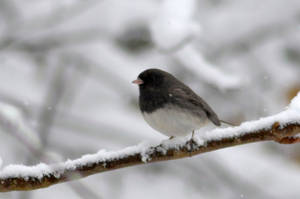 Chilly Birdy by uguardian