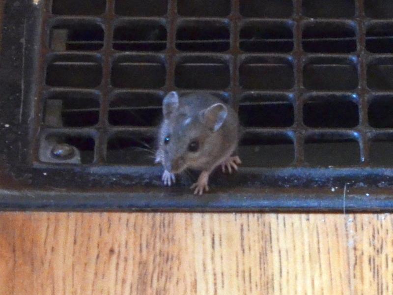 Cheeky little bugger by uguardian