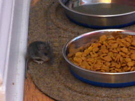 Mouse food by uguardian