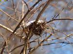 Ye Olde Nesting Site