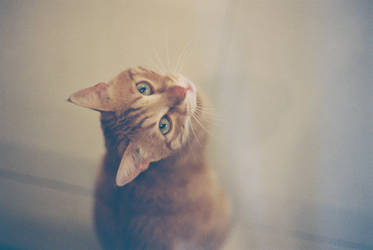 Nikon the cat by titah