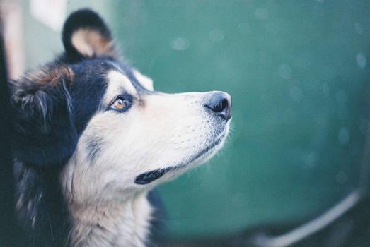 Sheva the dog