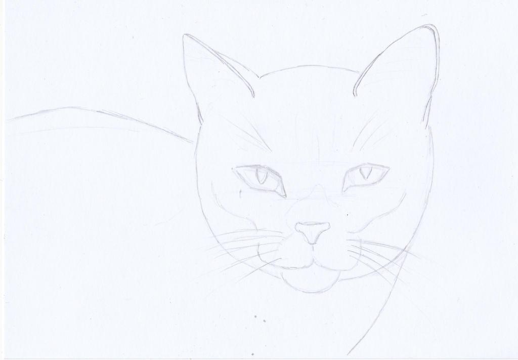 sketch: Cat by YunaMiasaki