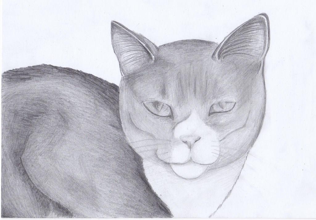 Finished cat by YunaMiasaki