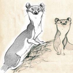 Wednesday Weasel