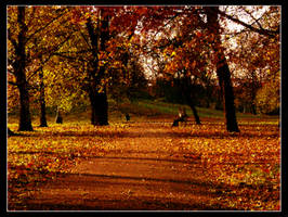impression-autumn sunset by blindbird