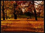 impression-autumn sunset