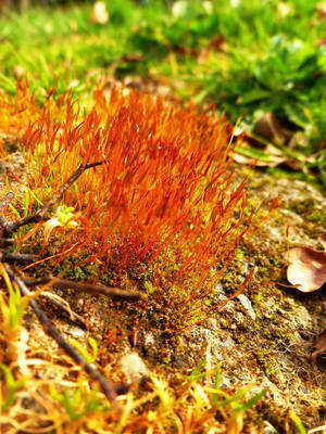 Mousse de printemps by Ombrecendre