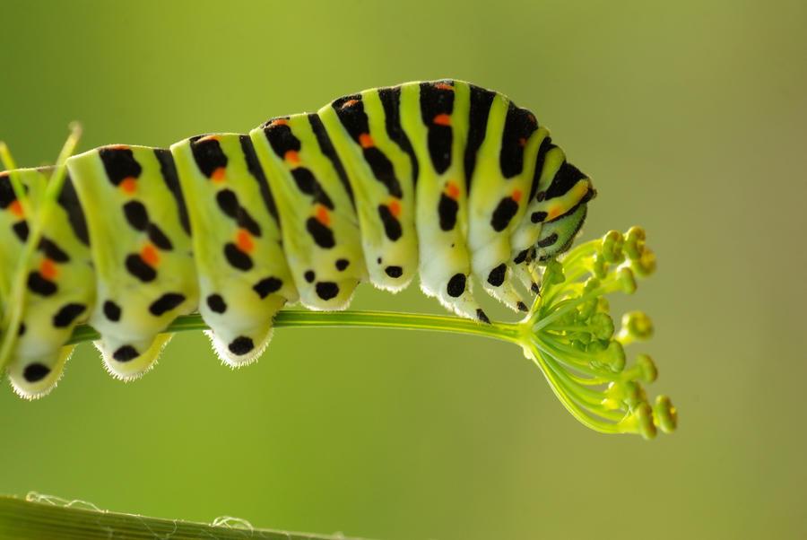 Catterpillar 8710 by gacek