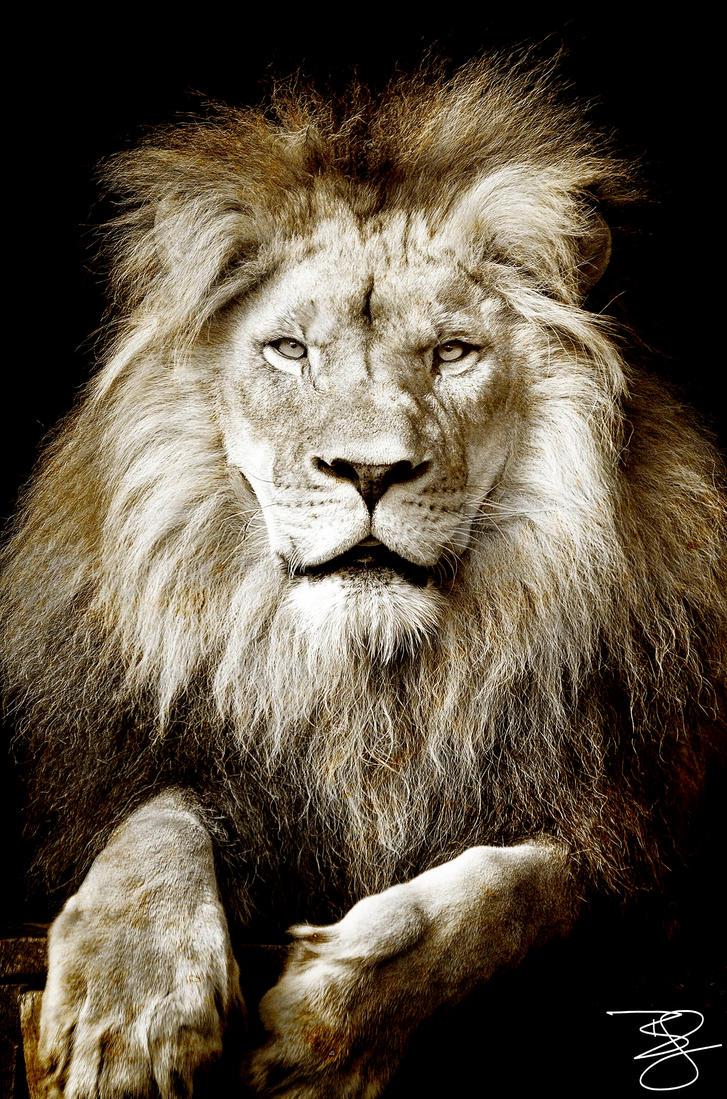 Lion Portrait by braxtonds
