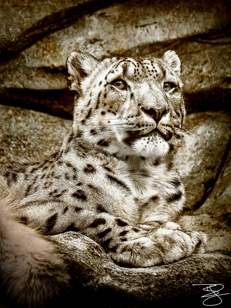 Sepia Snow Leopard by braxtonds
