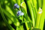 Flowers in Macro