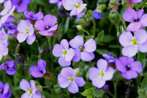 Flowers in Macro by Bijou44