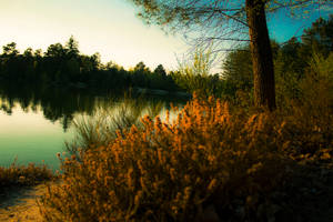 A lake in forest by Bijou44
