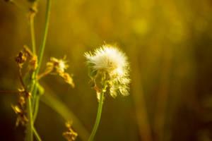 Flower by Bijou44