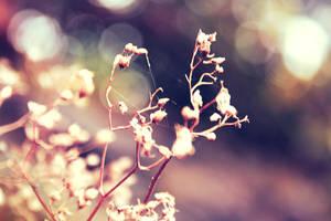 Angel's flowers by Bijou44