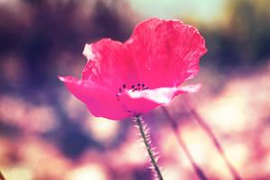 Last summer's flower by Bijou44