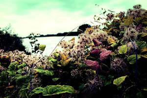Creepy flower by Bijou44