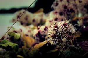 Dark Creepy Flower by Bijou44