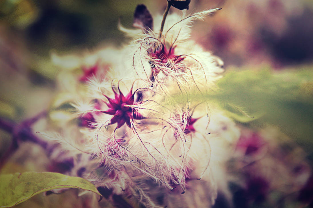 Strange dark flower