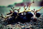 Grapes on the road