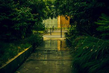 Urban forest #1