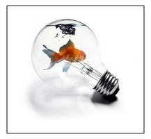 A Fishy Idea
