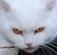 Evil Kitty PLZ by NesSelene