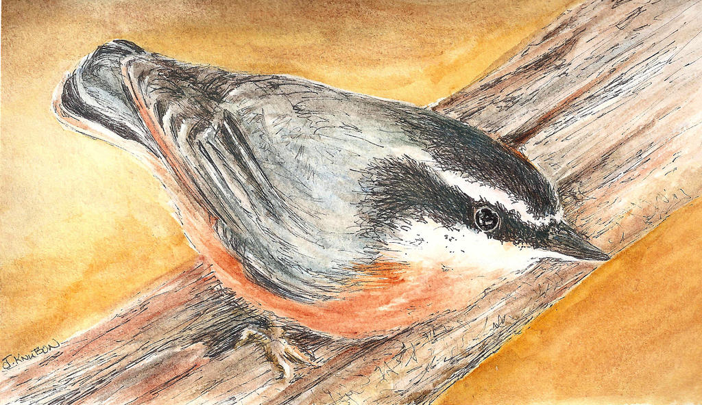 Pen-wash-nuthatch-cc by shadoj