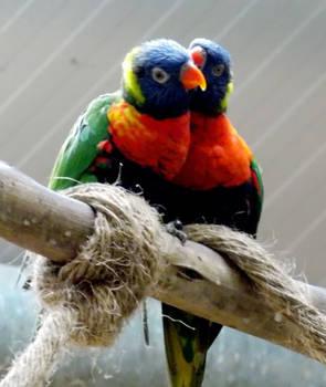 I've got a secret (Parrots)