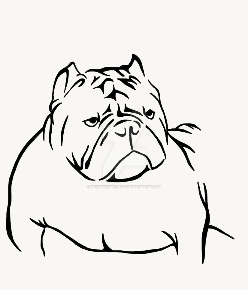 Exotic American bully by premiumbulldogs on DeviantArt