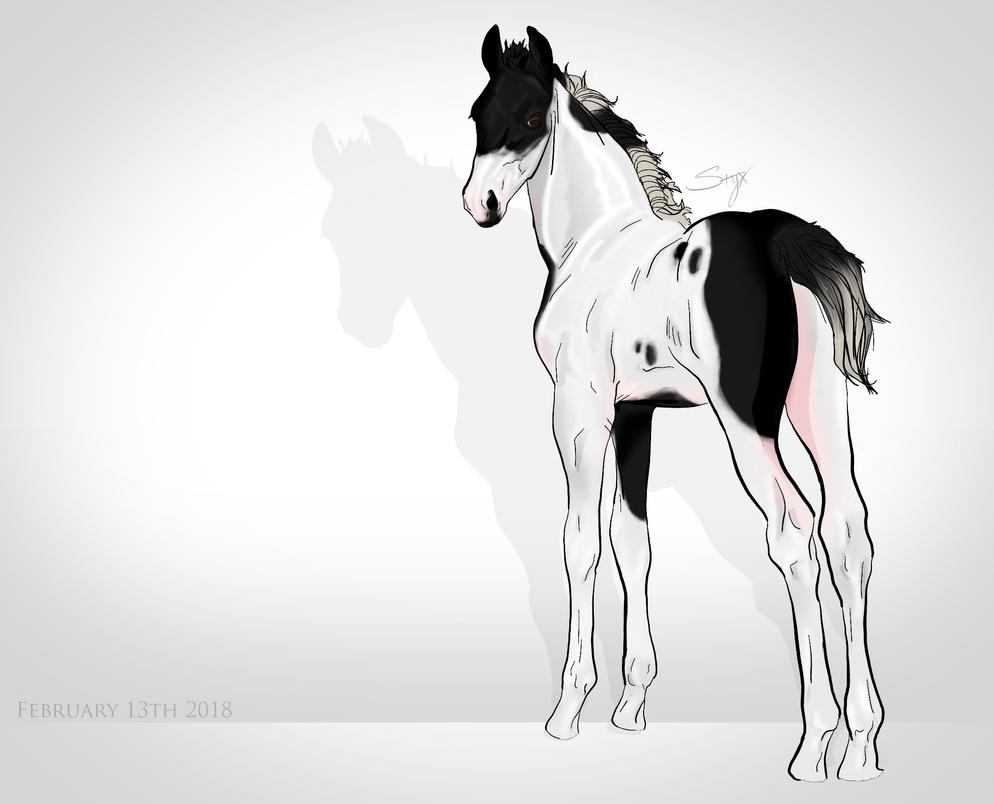Tobiano Foal by premiumbulldogs