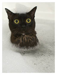 Roxy in the bath by mudbloodjew