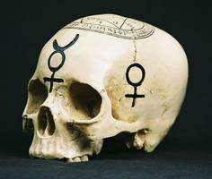 Skull stock 1 by sadistik-stock