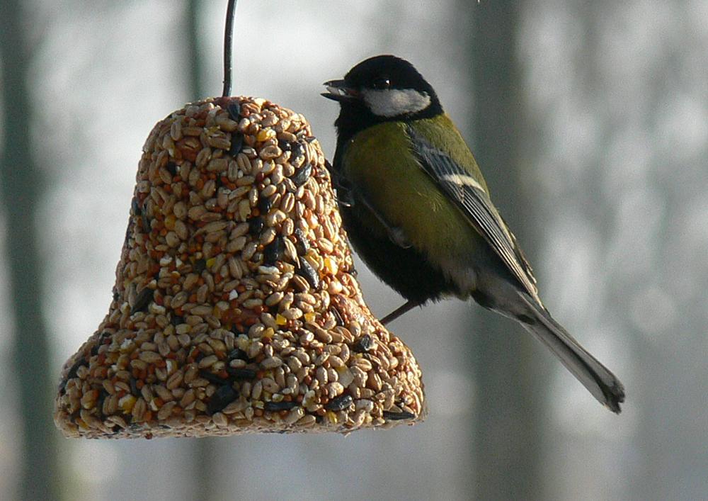 Znalezione obrazy dla zapytania dokarmianie ptaków