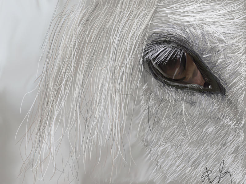 Horse Eyes Painting Horse Eye Painting by