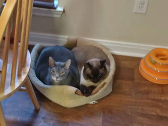 Bella and Barnaby 201022